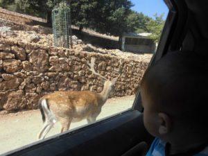Qual' è l'età migliore per portare i bambini la prima volta allo zoo?
