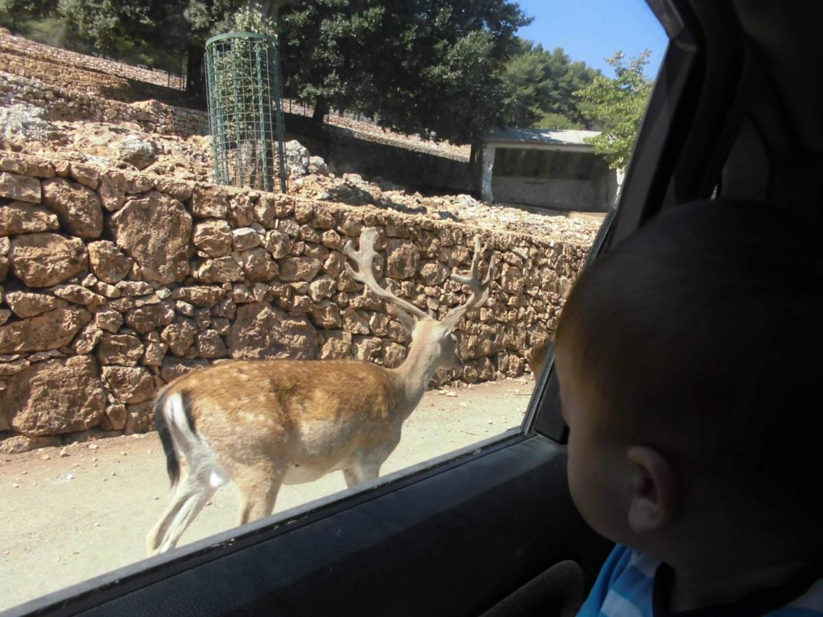 """""""Qual' è l'età migliore per portare i bambini la prima volta allo zoo"""""""
