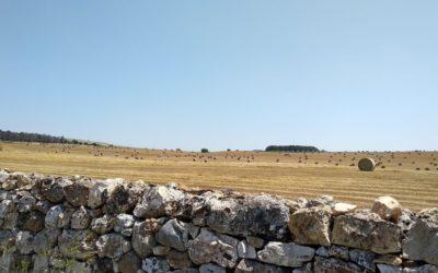 Dove andare in vacanza in Puglia questa estate 2020