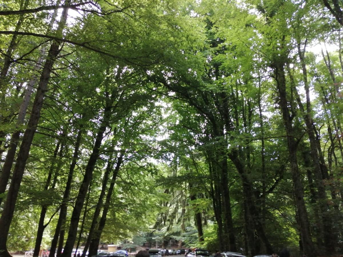foresta umbra in puglia