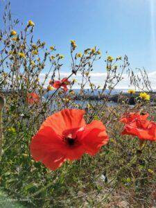 Quali sono le spiagge bandiera blu in Puglia?